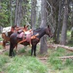 Moose hunt in Idaho