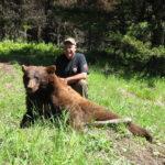 Large cinnimon bear