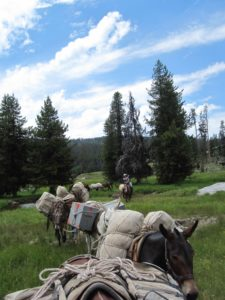 Guided Wildlife Trips in Idaho