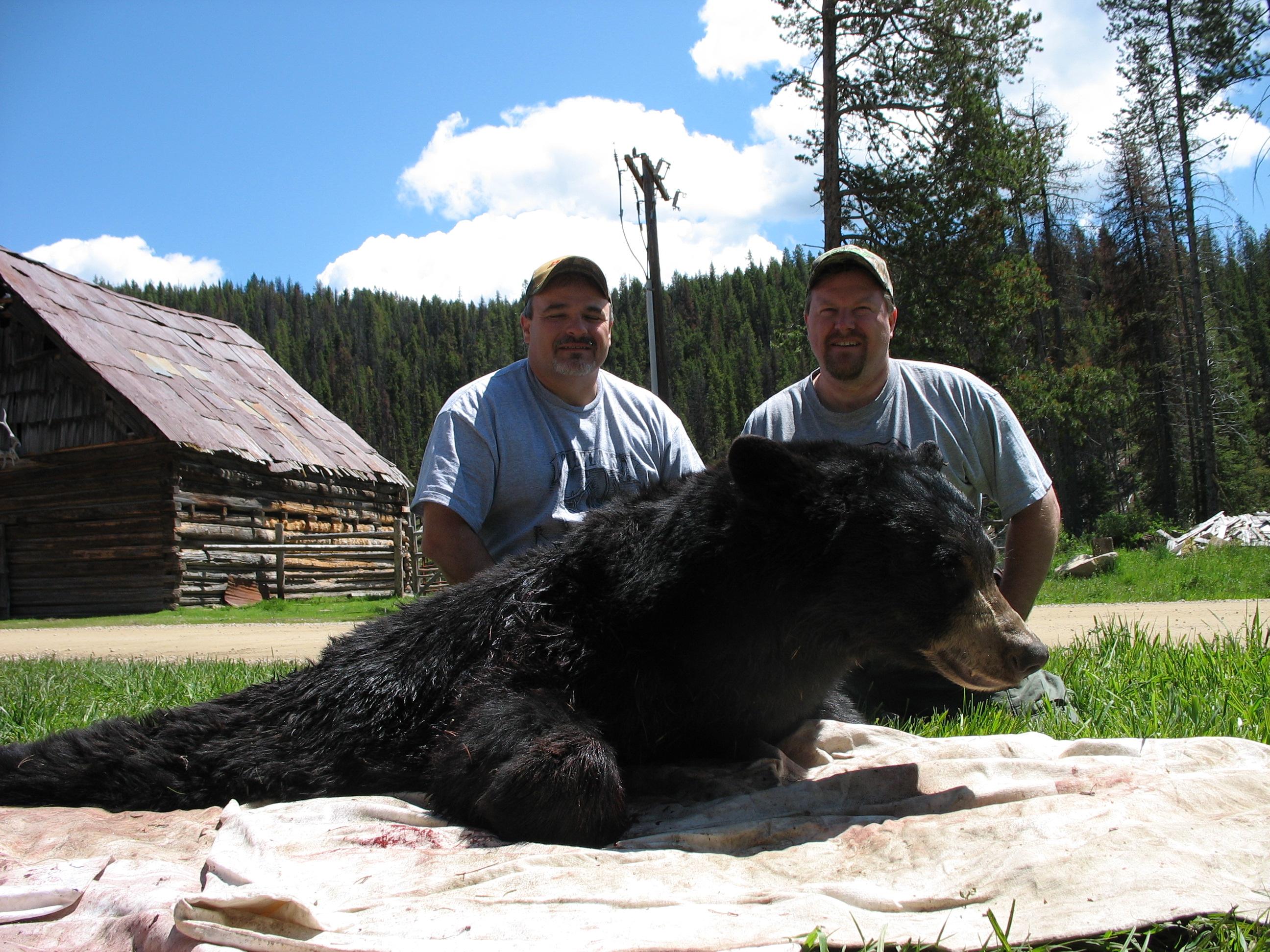 Don bear 2007