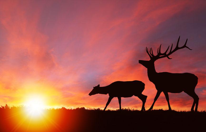 Elk Hunting at Silver Spur Lodge