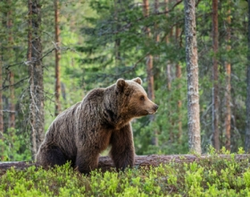 5 Tips for a Successful Bear Hunt